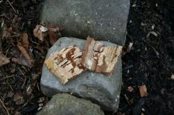 Birkenrinde - Haut (links) von grober Unterschicht (rechts) gelöst